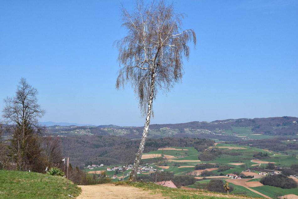 Samotna breza pod vrhom našega izleta po južni Sloveniji.