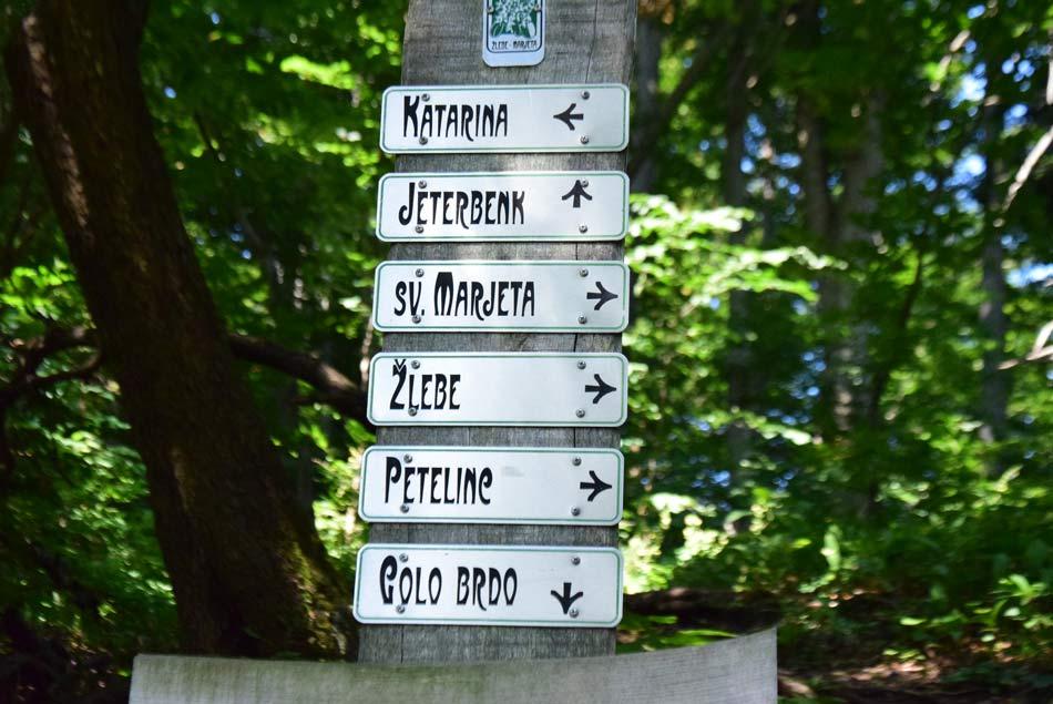 Na izletu po gozdovih Jeterbenka je veliko smeri.