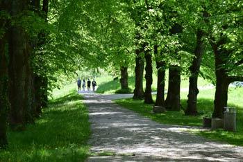 Grad Bogenšperk se ponaša z velikim in lepo negovanim grajskim parkom katerega del je tudi velik drevore.