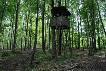 Gozdna pot Pišece nas vodi skozi gozd ob istoimenskem gradu.