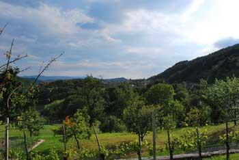 Gozdna krožna pot Pišece v Bizeljskem gričevju nas na koncu razveseli z razgledi na vasi in vinograde.