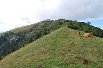 Na Hruškem vrhu se odpre razgled na Julijske Alpe.