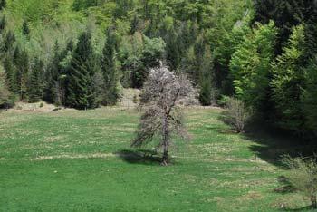 Pot nas do izvira Rakitnice vodi po dolini med Bukovico in visoko Veliko goro.