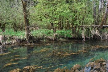 Reka Ribnica izvira ob vznožju Velike gore. Ob sončnem vremenu dobi voda turkizne odtenke.