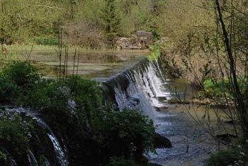 Sprehod ob izviru reke Ribnice poteka v neokrnjeni in zamočvirjeni naravi. Nižje teče preko travnate ravnine.