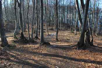 Jelenov rog se nahaja na krožni poti k Čemšeniški planini.