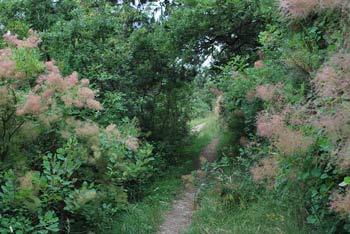 Pot preko Jurjevega hriba nas vodi po mirnem hrastove gozdu nad oljčnimi nasadi.