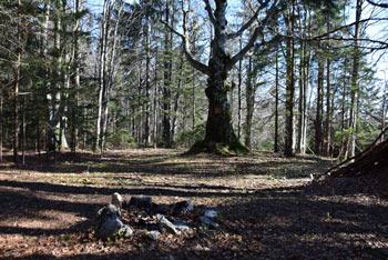 Znamenje na starem drevesu pod Kaličnim vrhom, tam kjer se združita planinska pešpot in Pot kurirjev in vezistov.