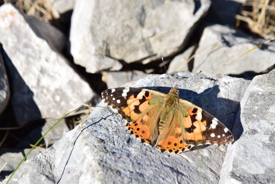 Iz Kavčiča se odpre razgled na celotno Istro in tudi Čičarijo.