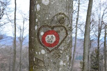 Ključ je manj znan hrib v Polhograjskem hribovju preko katerega vodi več pešpoti.