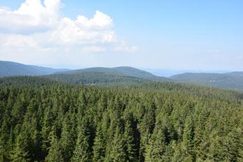 Koča na Jurgovem se ponaša s širokim razgledom na prostrane pohorske gozdove.