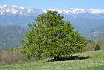 Korada se nahaja visoko nad dolino Soče med Matajurjem in Sabotinom.