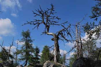 Iz Kozjega vrha se odpre razgled na vrhove okoli Storžiča in jezerske vrhove.