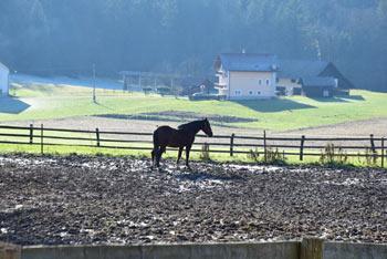 Lavričeva koča na Gradišču se nahaja na poti, ki nas vodi mimo staje za konje.