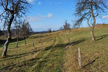 Mali Trebelnik se nahaja visoko nad Borovnico in zahodnim robom Ljubljanskega barja.