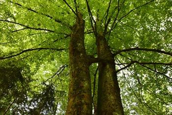 Mlinčki so med nedeljskimi izletniki pribljubljen cilj. Nahajajo se sredi gozda in se vrtijo na potoku. V neposredni bližini se nahaja izvir zdravilne vode Žegnan studenec.