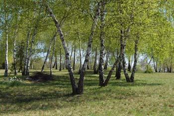 Muljava, rojstni kraj Josipa Jurčiča, nas vodi mimo gradu Kravjek in do Polževega.