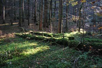 Do Nagelbihla nas vodi Kočevska planinska pot skozi globoke gozdove Stojne.