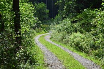 Povratek z Olske gore poteka po makadamski cesti, ki na vodi skozi gozd na obrobju Ljubljane.