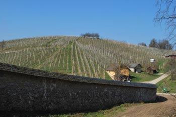Med vinogradi Pleterskega hriba se odpre razgled na samostan pod njim in pobočja hribov pod Gorjanci.