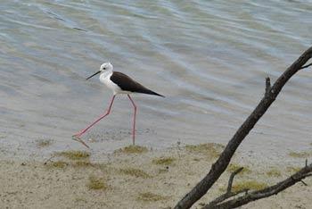 Škocjanski zatok je polslan naravni rezervat pri mestu Koper, kjer se zadržujejo številne, tudi zelo redke, ptice.