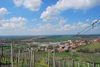 Na Sveto Trojico nad Lendavo se povzpnemo z otroki, saj hodimo med vinogradi in občudujemo razglede.