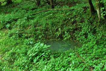 Travnice so manjše kraško polje blizu Trebnjega, kjer se voda izliva sredi travnikov.