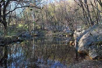 Vitovsko jezero sredi gozda pod hribi Trnovskega gozda predstavlja družinski izlet v naravi.