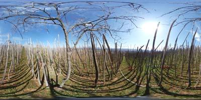 Na Golobinjeku imajo od cerkvijo svete Uršule stare vinograde, kjer se da narediti zanimiv panoramski posnetek.