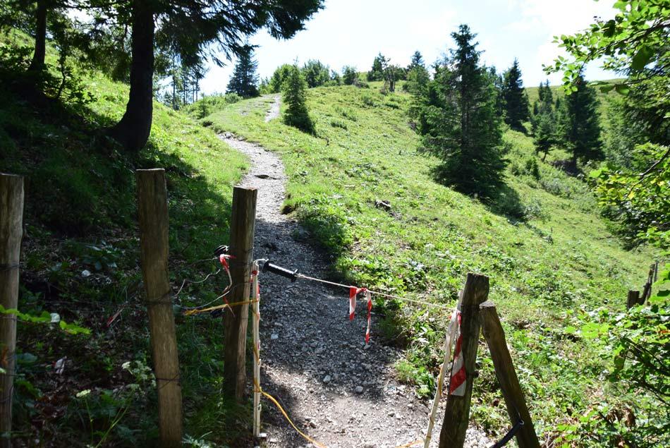 Električna obora tik pod vrhom Blegoša, ki je ena sama razgledna planina.