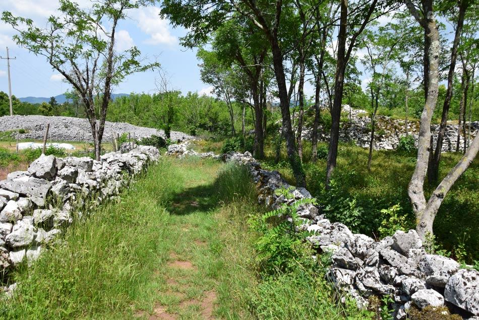 Pešpot nas vodi ob suhem kraškem zidu proti arheološkem najdišču.