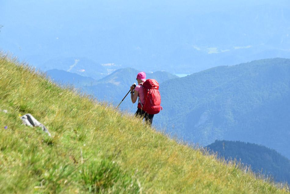 Rožnati planinec gre s Kleka in Jeseniške planine na Golico.