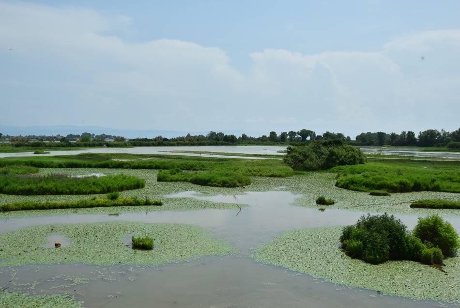 Močvirnata ravnica v lagunah naravnega parka Isole della Cone.