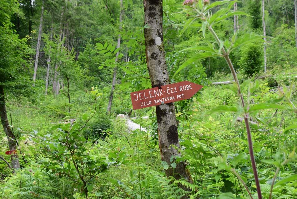 Kam zaviti za vzpon po zelo zahtevni smeri na Jelenk.