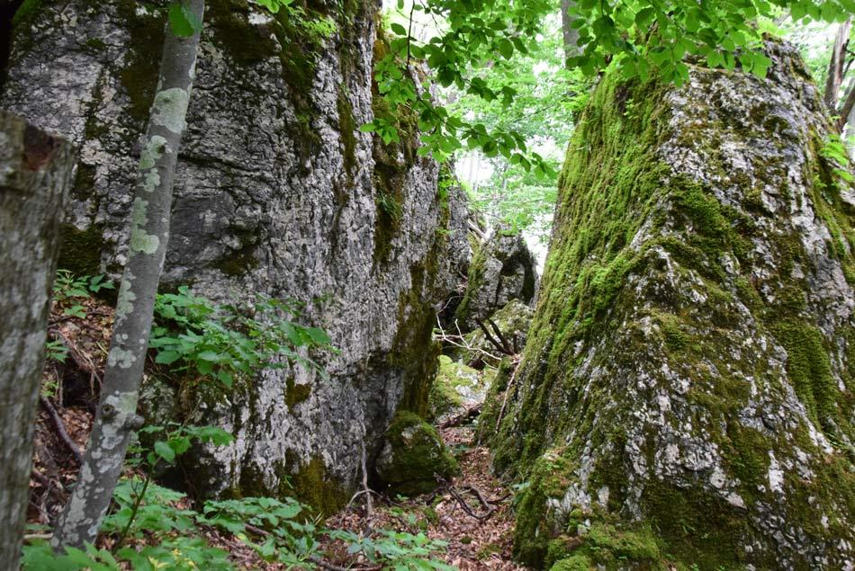 Skrivnostni megaliti na poti na Jelenk pritegnejo pozornost z visokomi in gladkimi stenami.