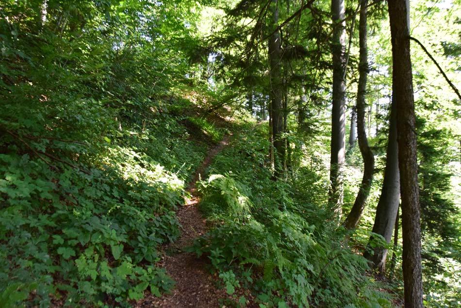 Ozka pešpot nas vodi skozi gozd proti ozkemu grebenu.