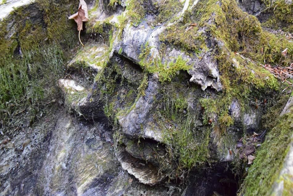 Gozdni škrat izrezljan v korito za vodo na poti na Jeterbenk.