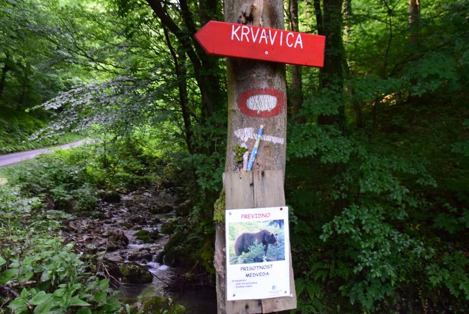 Planinski smerokaz nas usmerja kam na pot na Krvavico in da se v njenih gozdovih občasno nahaja medved.