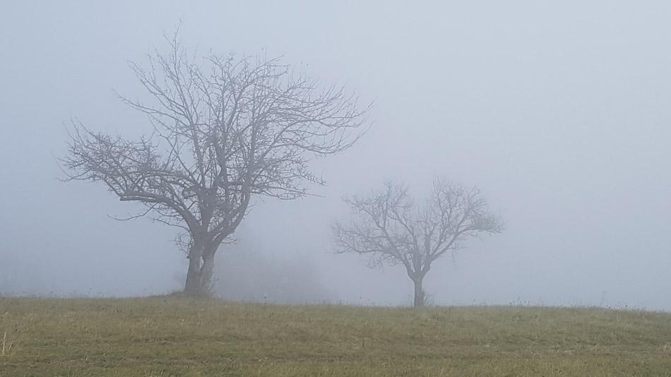 Kmečki sadovnjak prekrit z meglo na poti na Osrenco.