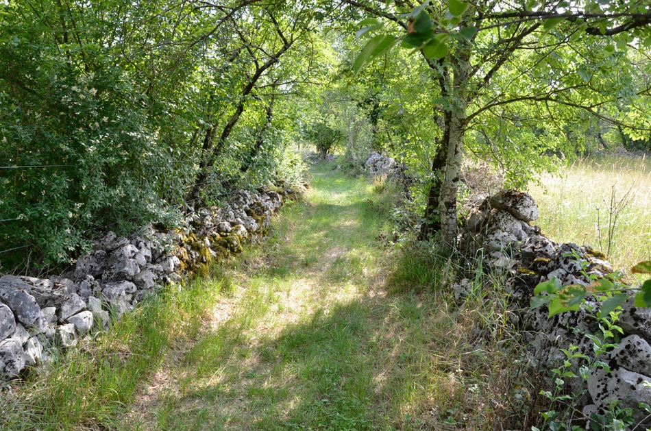 Suhi zid je na Krasu stalnica. Ta vodi med vrtačami proti Pliskovici.