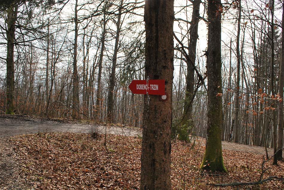 Kam na izlet čez Rašico proti Dobenu nam pove planinski smerokaz sredi gozda.