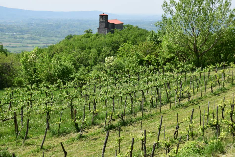Cerkev nad Vitovljami med vinogradi pod visokim Trnovskim gozdom.
