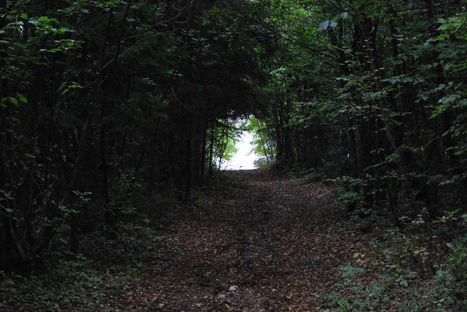 Do cerkve svetega Jožefa nas skozi grmovje vodi hodnik zelenja.