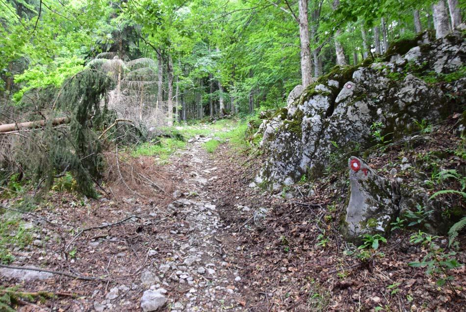 Na poti skozi kočevski gozd na vodijo planinske markacije.